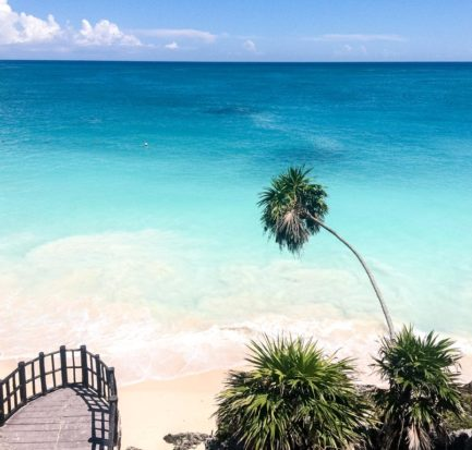 view on blue water, palm tree in Tulum