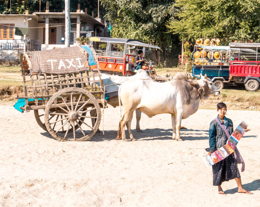 a woman presenting post cards for sale next to an ox pulling a cart that says taxi on it