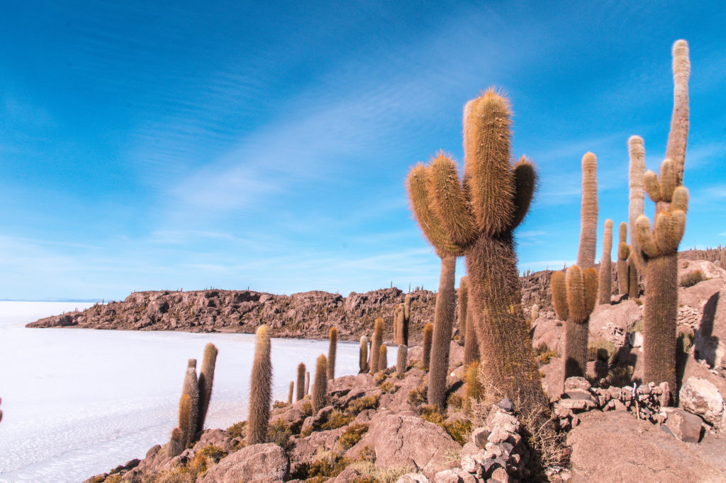 a view on cactuses and a white lake in Incahuasi Island, Bolivia which was the most beautiful place in South America