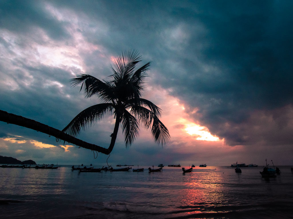 a big palm tree overlooking a pinky sky, unique experiences in Thailand, Ko Tao #thailand#thailandtravel#thailandtraveltips#thailandthingstodo#bestof thailandbucketlists#experiencesinthailand