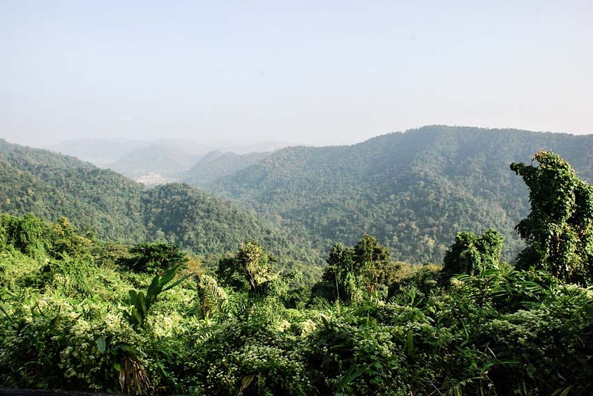 a view on the green forrest of Khao Yai National Park in Thailand