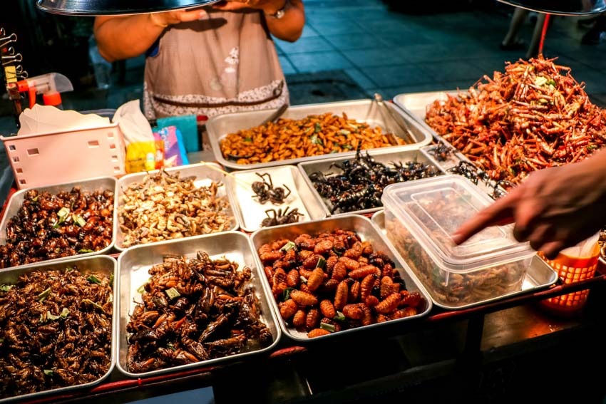 different bugs and insects in trays, one of the unique experiences in Thailand #thailand#thailandtravel#thailandtraveltips#thailandthingstodo#bestof thailandbucketlists#experiencesinthailand