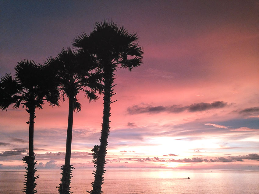 three palm trees in front of the ocean during sunset