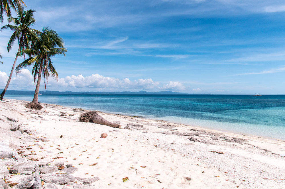 A beach with palm tress, sand and view on the ocean on Kalanggaman peninsula in the Philippines #kalanggamanisland#kalanggamanislandphilippines#kalanggamanisland leyte#kalanggamanislandbeautiful#kalanggamanislandinthephilippines#philippines