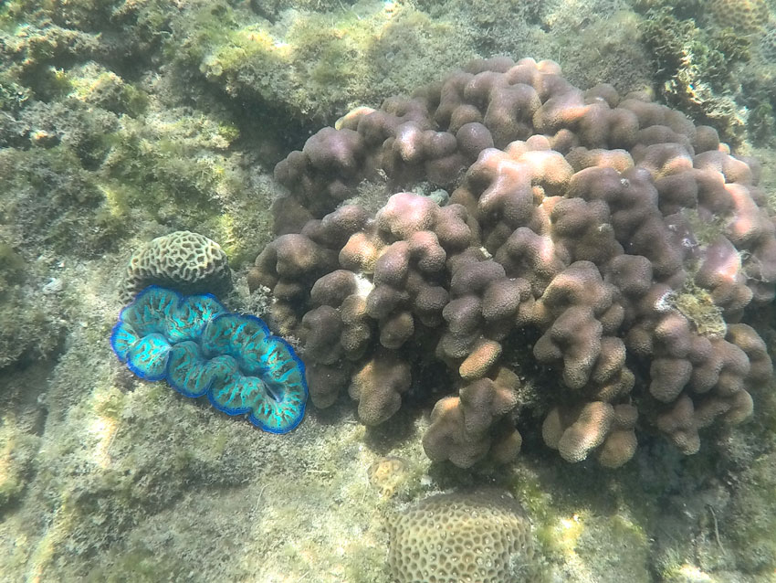 perhentian diving: corals