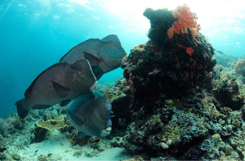 perhentian diving