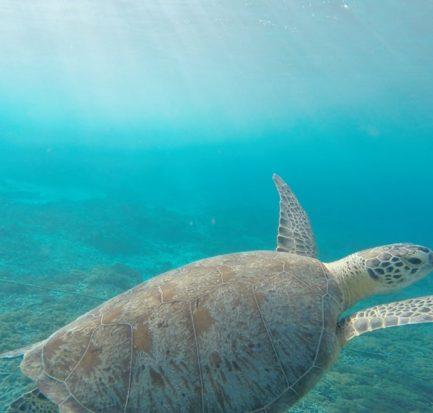 Perhentian diving- turtle