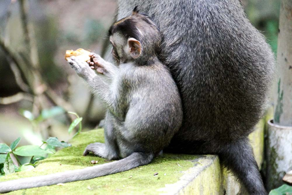 2 monkeys sitting on a wall