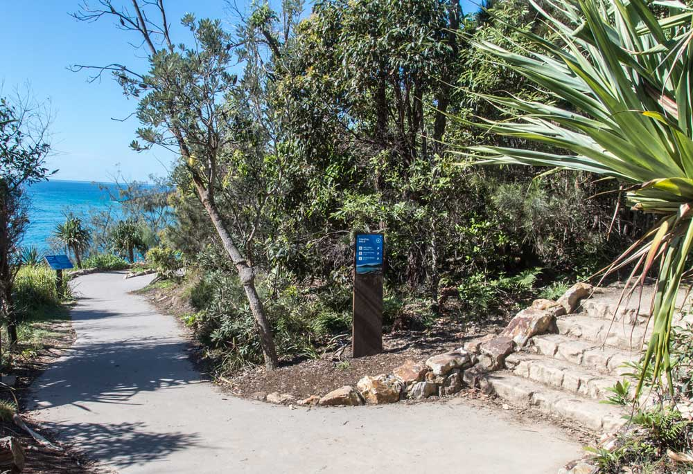a walking path splitting into 2 paths in noosa national park
