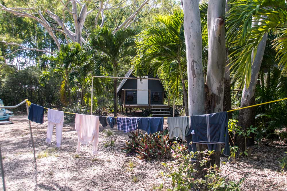 laundry on a clothing line in front of palm trees