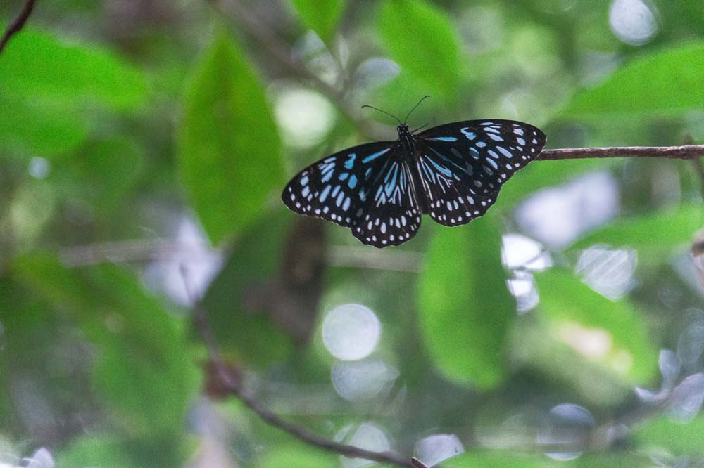 a blue butterfly in front of a green background