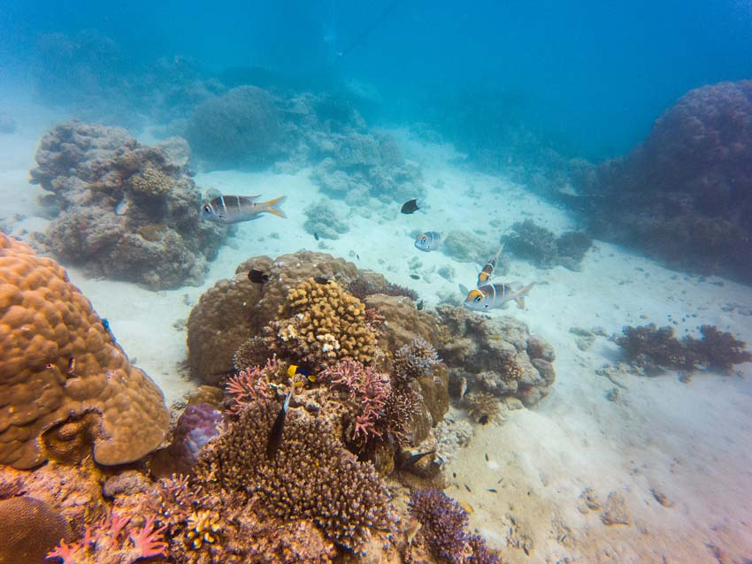 an underwater picture showing corals and fish