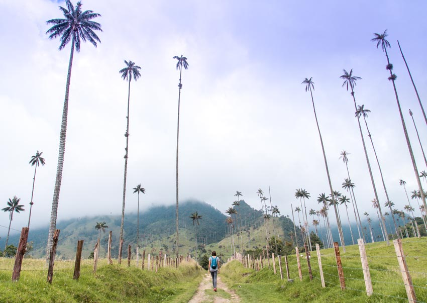 a girl hiking in Cocora Valley under palm trees