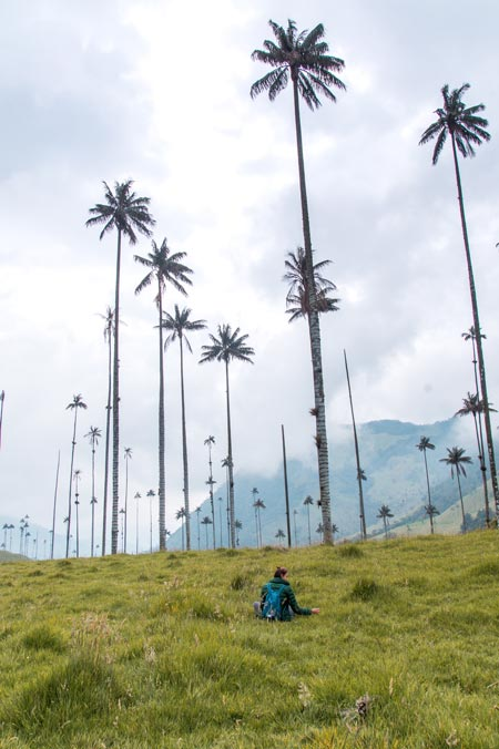 a girl sitting on the green grass under the wax palm trees