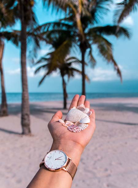 a hand holding several sea shell and palm trees and the ocean in the background