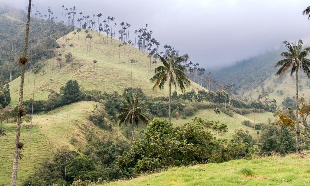 a view on Cocora Valley, Salento