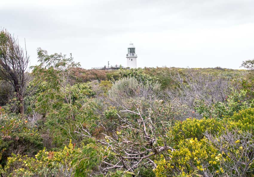 A view on a lighthouse surrounded by green bush