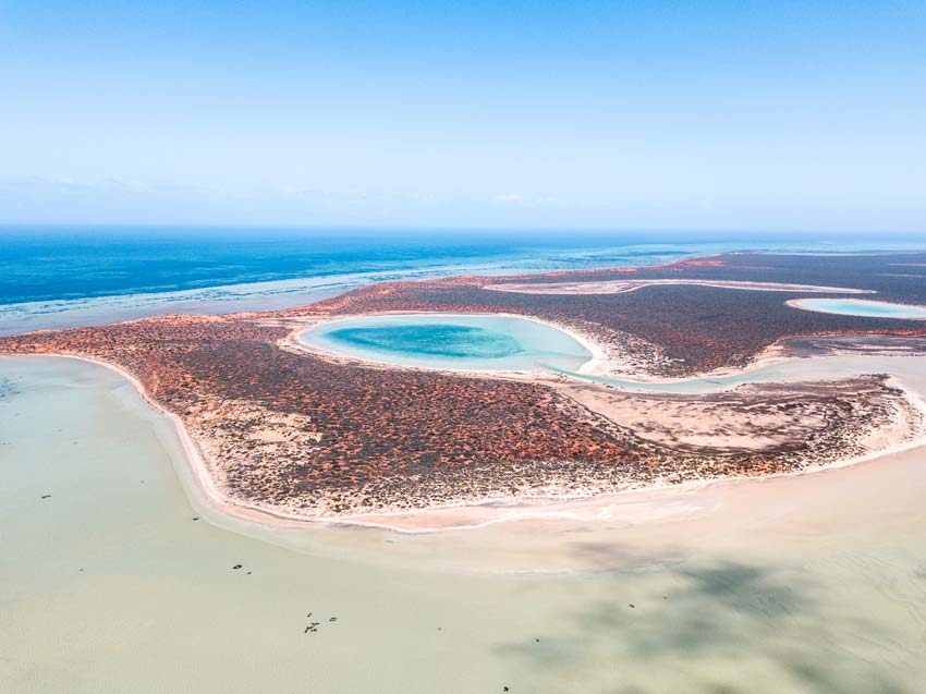 an aerial view on Shark Bay's blue water with red sand and turquoise lagoons in the background