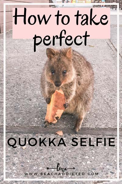a full guide on how to take perfect photos with quokkas