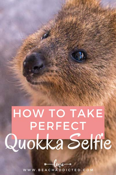 a full guide with all photography tips on how to take perfect pictures with quokkas