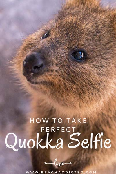 how to take awesome pictures with quokkas without scaring them, all our photo tips and tricks