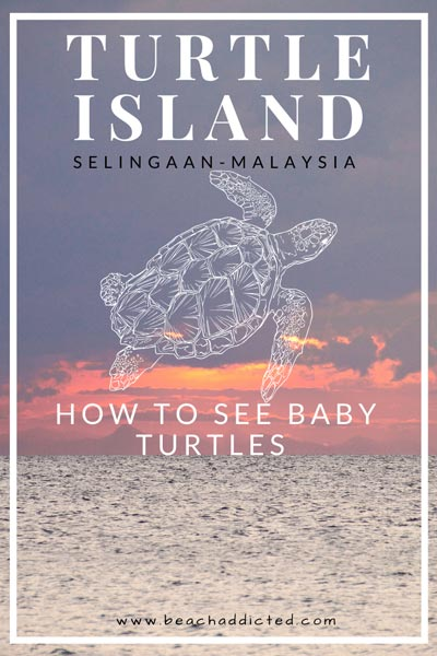 a full guide to see baby turtles on Selingaan island in Malaysia