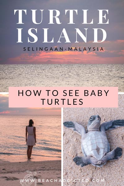 how to see baby turtles on Selingaan island in Malaysia