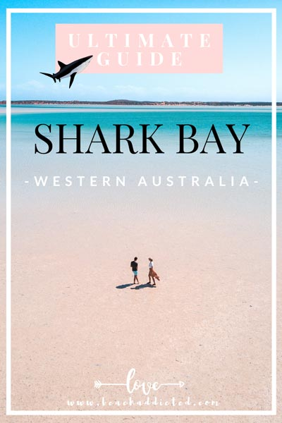 comprehensive guide to Shark bay, Western Australia with extra tips and best places to see