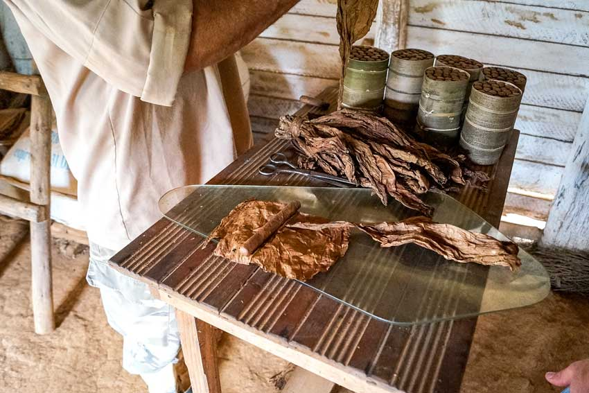 cuban cigars, dried tobacco leaves and local is rolling a cigar in tobacco farm