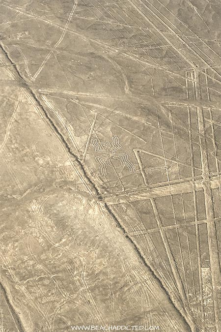 a drawing of a Nazca spider engraved into brown earth
