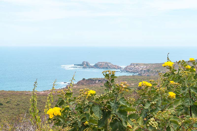 yellow flowers with a view on blue ocean and black rocks with green scenery