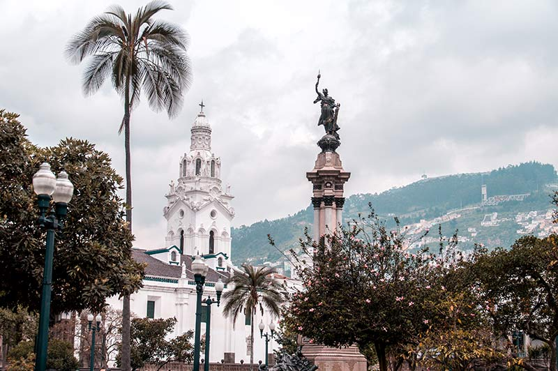 white building, palm tree and the monument in Plaza Grande