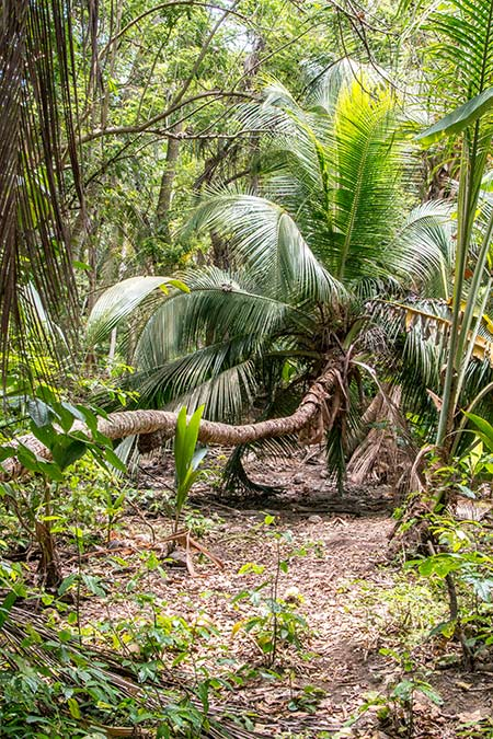 a green palm tree hanging on the ground