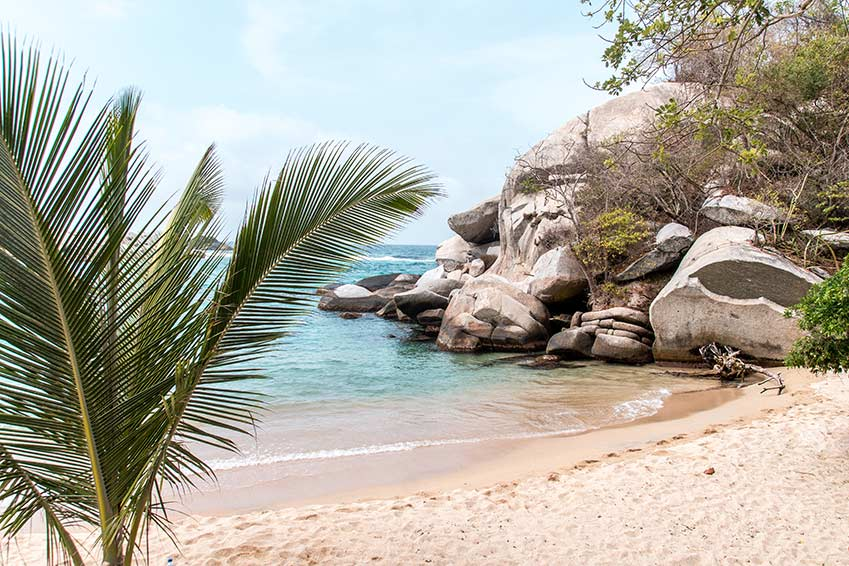 a green palm tree, blue water and the rocks on the golden sand beach