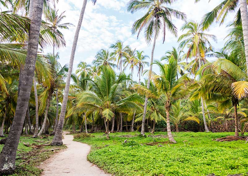 Palm trees and the walking path