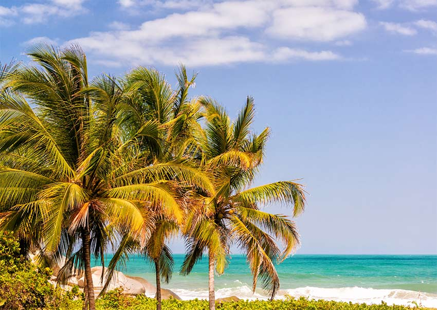 green palm trees. white sand and turquoise water in Tayrona National park