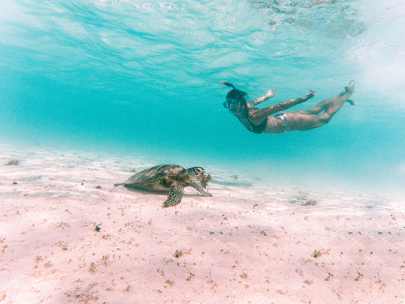 blue waters, woman snorkeling and a big turtle in Exmouth, Turquoise bay