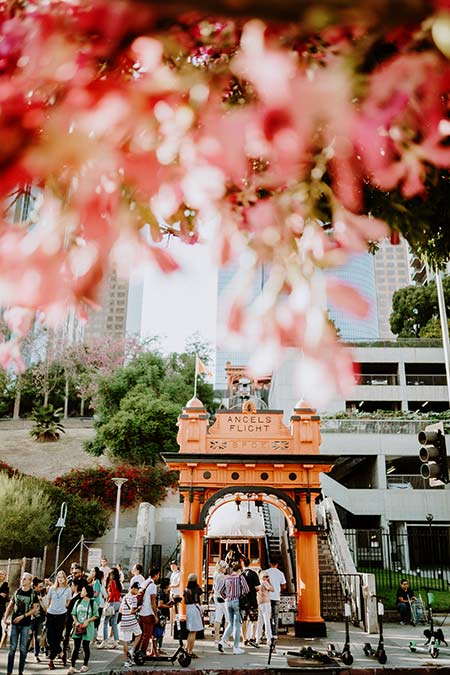 pink flowers, yellow train and many people walking around near Angels Flight
