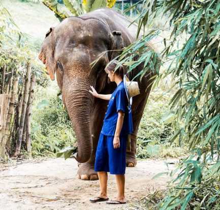 woman wearing blue dress is standing next to the elephant in Chiang Mai, Thailand
