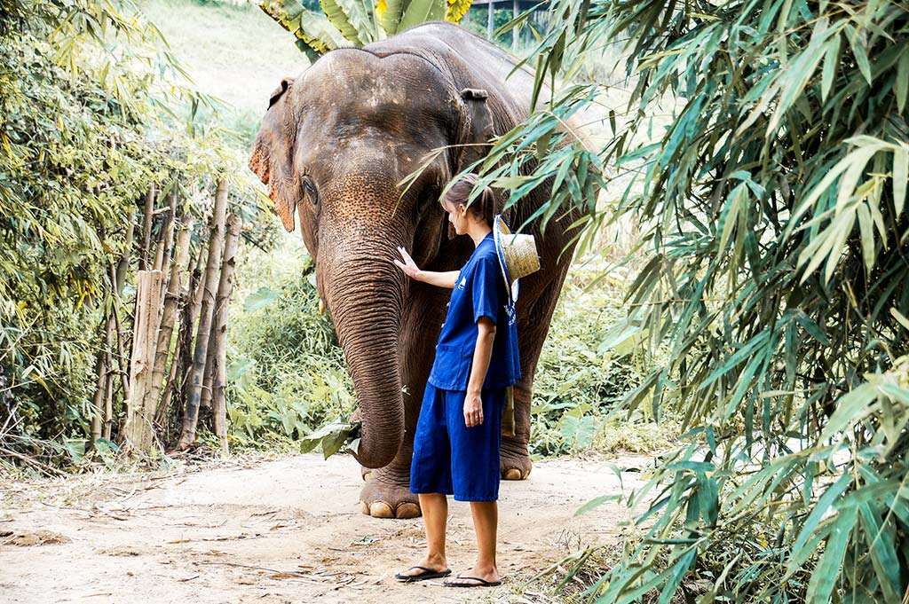 woman wearing blue dress is standing next to the elephant in Chiang Mai, Thailand which needs to be in your itinerary