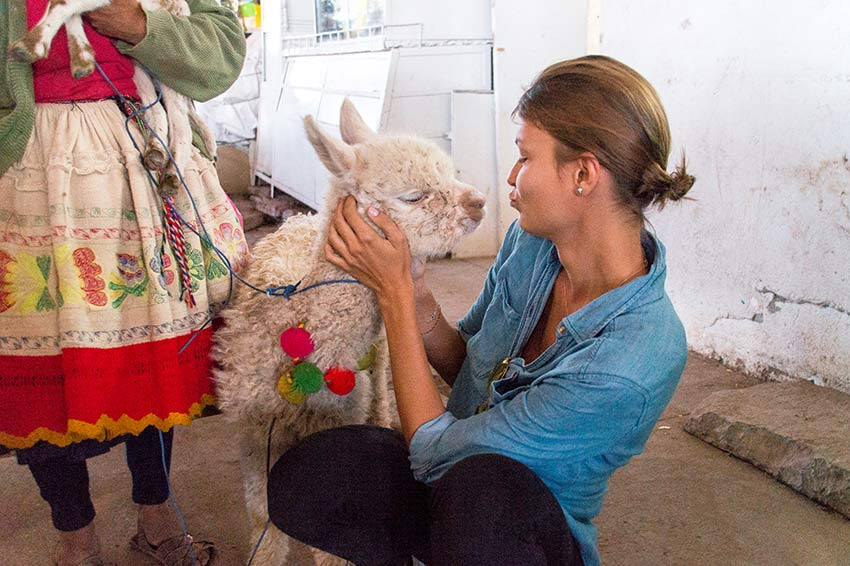 a girl and a baby alpaca looking at each other