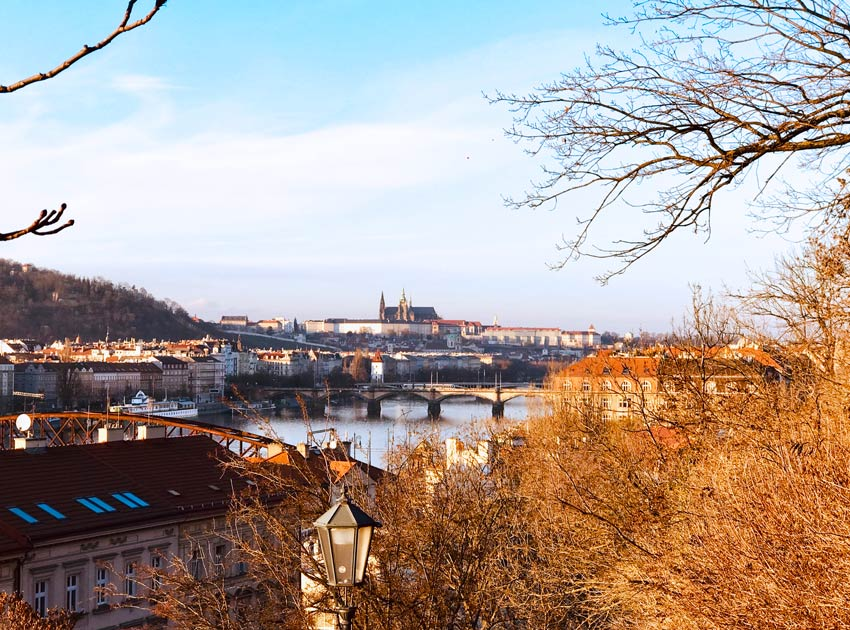 brown bush with a view on the bridge and Prague castle