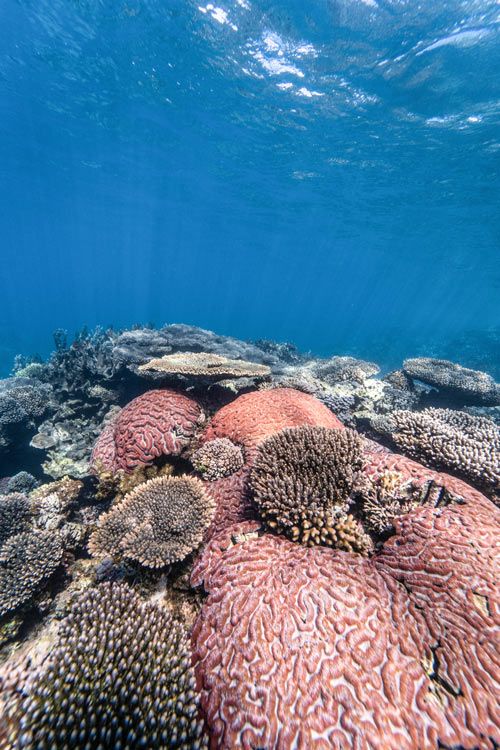 underwater shots with red corals and blue water in Ningaloo reef